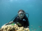 Daily diving trips and scuba diving courses