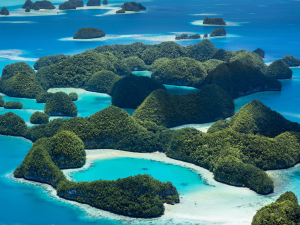 Palau with sharks and many other creatures